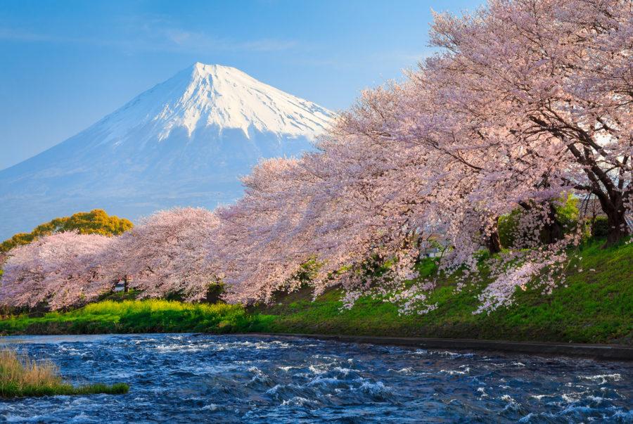 La belleza de la primavera en Japón